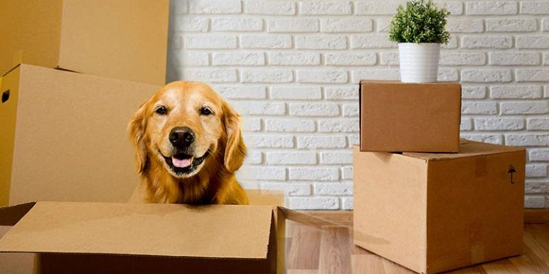 packing-moving-pet-and-house-plants
